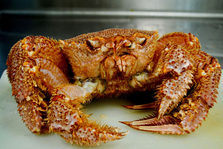 Japanese Hairy crab imported from Hokkaido. (Photo courtesy of Sushi Ginza Onodera Los Angeles/Facebook.)