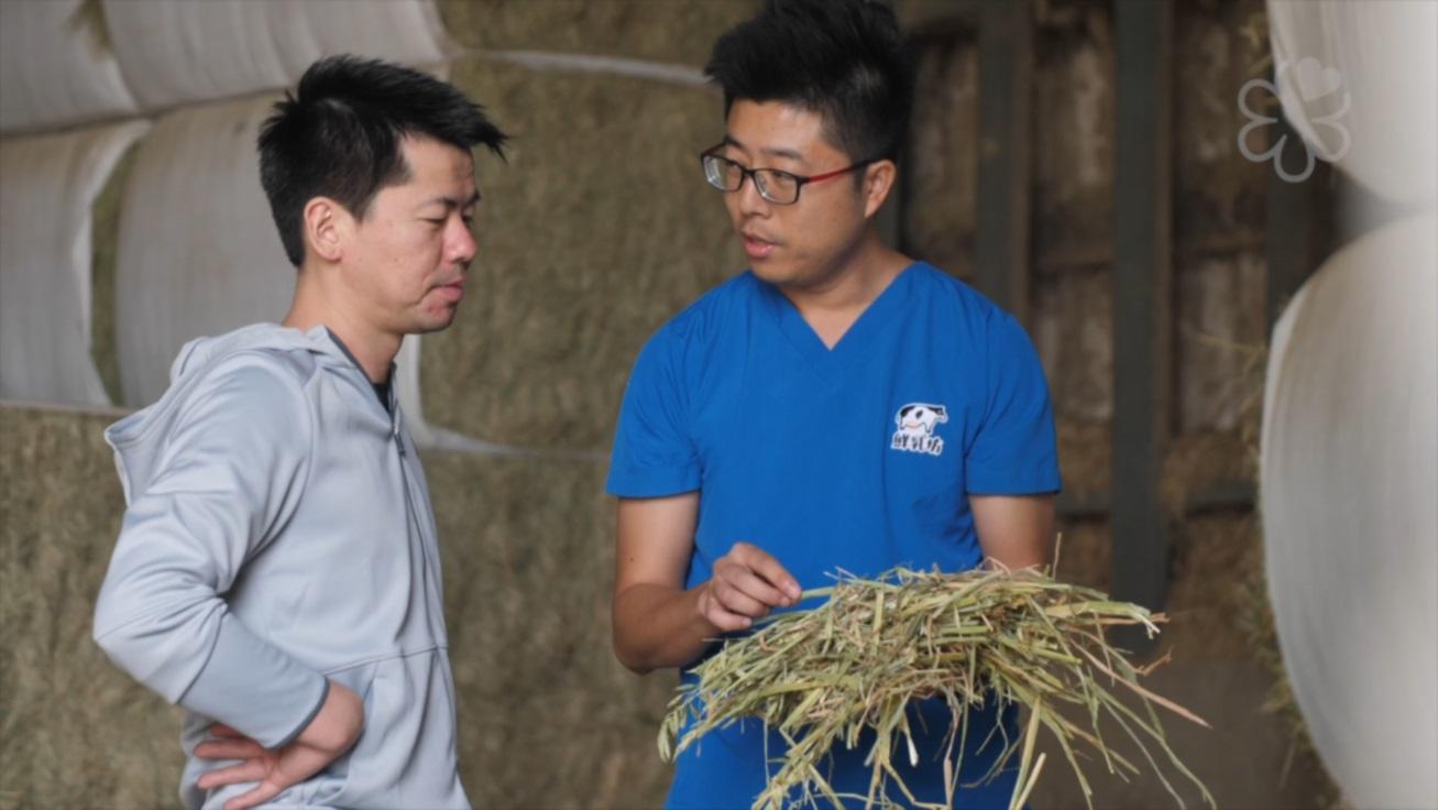 去年,稗田良平到彰化豐樂牧場拜訪。最讓他驚訝的,是牧場會依據牛隻的身體狀況、甚至考量牛隻入口的口感,調整牧草的比例。