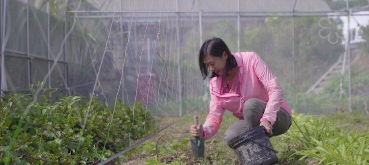Upon receiving the coffee grounds, Hermia Chung, site manager of the Hong Kong Organic Waste Recycling Centre, will decompose them into compost, which is then used for planting vegetables.