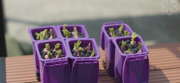 Radishes were presented in a container resembling a mini recycling bin.