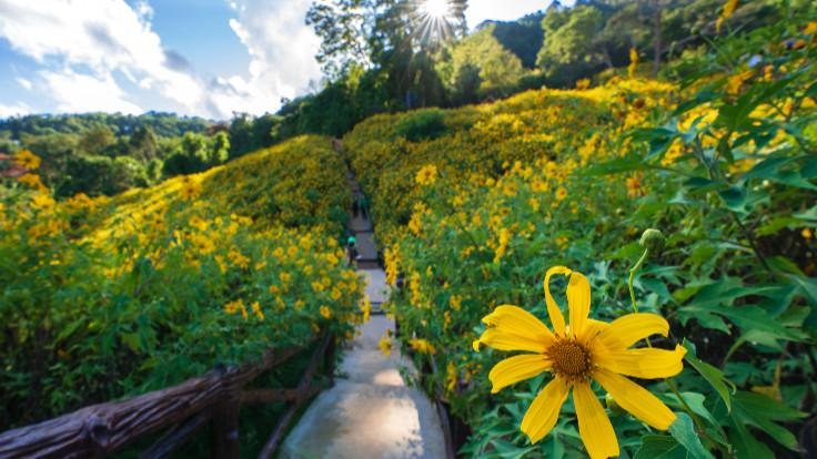Chiang Rai-Doi Hua Mae Kham