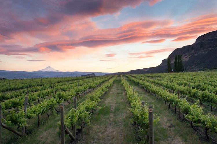 Mt. Hood and the Columbia River Gorge from Cascade Cliffs Vineyard & Winery, Wishram, Washington State. Photo © Andrea Johnson Photography / Washington State Wine Commission