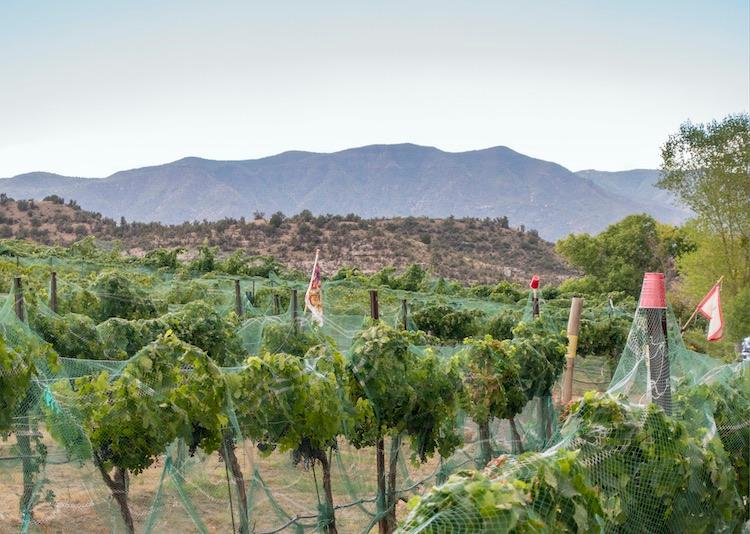 Alcantara Vineyards, Verde Valley, Arizona. Photo © Ryan Donnell / Arizona Office of Tourism