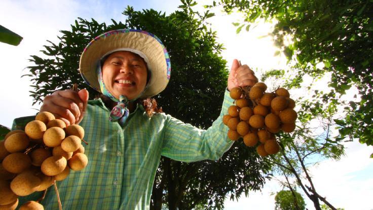 ผลไม้ส่งตรงจากสวนของเกษตรกรก็มีให้เลือกสั่งได้เช่นกัน (© Shutterstock)