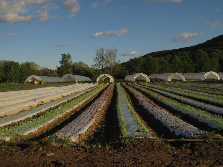 The MICHELIN Guide is partnering with Norwich Meadows Farm for a pilot CSA program. Photo courtesy of Brant Shapiro of Norwich Meadows Farm.