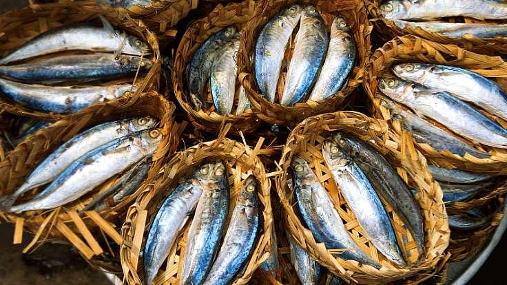 ปลาสด ๆ ที่พบได้ในตลาดสดแถบเอเชียตะวันออกเฉียงใต้ (© Shutterstock)