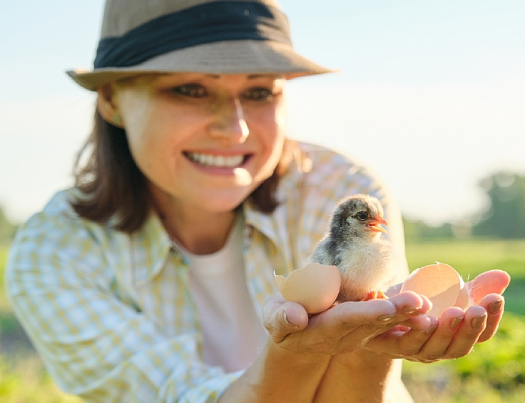 Healthy raised chickens are related to human's good health. (© Shutterstock)
