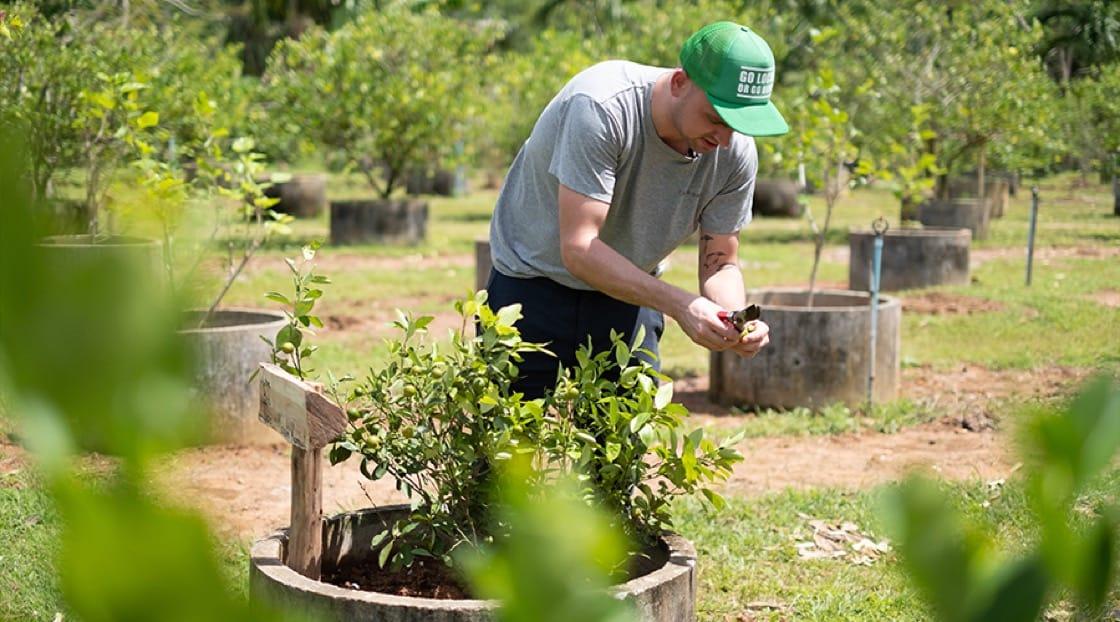 เชฟ Jimmy Ophorst กับพืชสมุนไพรในฟาร์มพรุจำปาที่ตรีสรา จังหวัดภูเก็ต (© MICHELIN Guide Thailand)