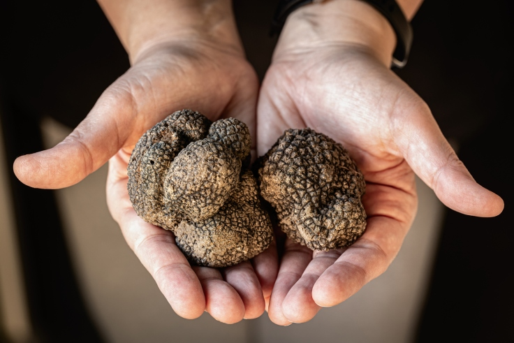 เห็ดทรัฟเฟิลอันมีค่าของคนครัวและนักกินทั่วโลก (© iStock)