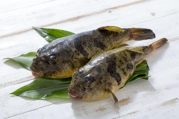 Surnommé « roi des produits d'hiver », le fugu est un mets apprécié dans tout le Japon. ©iStock