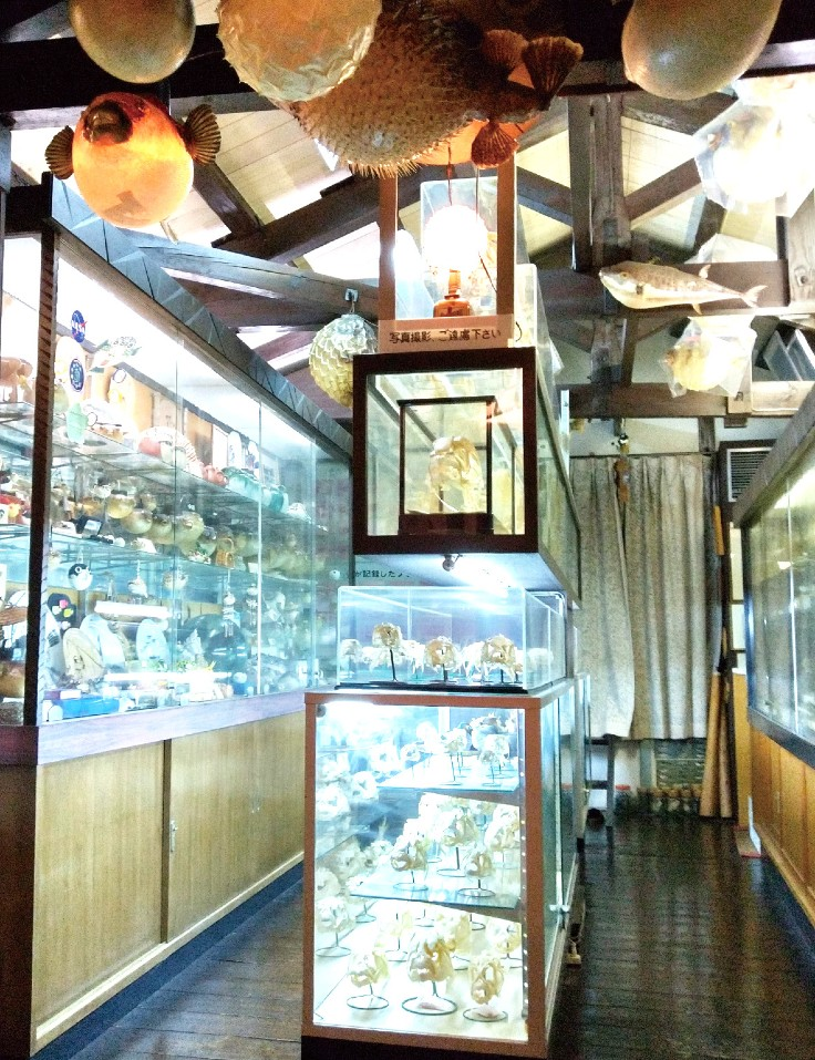 Fugu museum Kitahachi.jpg