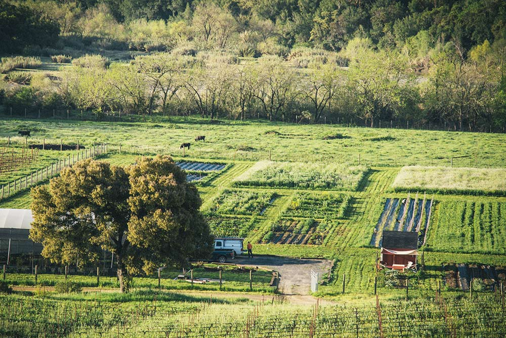 SingleThread's farm. Photo by Eric Wolfinger, courtesy of SingleThread