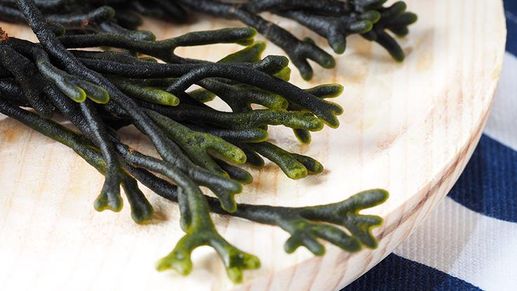 Velvet horn seaweed. © efesan/iStock
