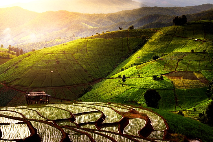 The rice fields of Mae Chaem glistens vibrantly after the rain in Chiang Mai. (© Shutterstock)